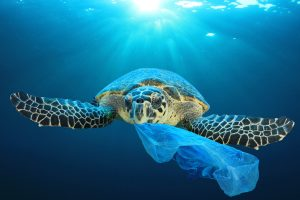 Marine Turtle Eating Plastic Waste